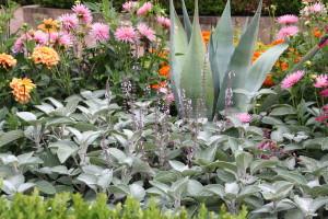 140804_Botanic_Garden_Agave1